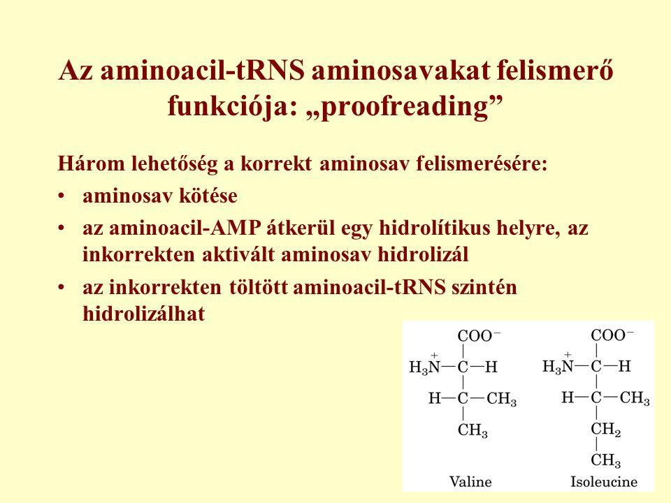 """Az aminoacil-tRNS aminosavakat felismerő funkciója: """"proofreading"""