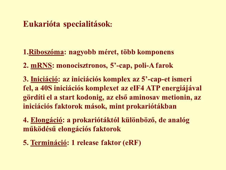 Eukarióta specialitások: