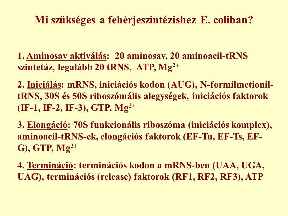 Mi szükséges a fehérjeszintézishez E. coliban