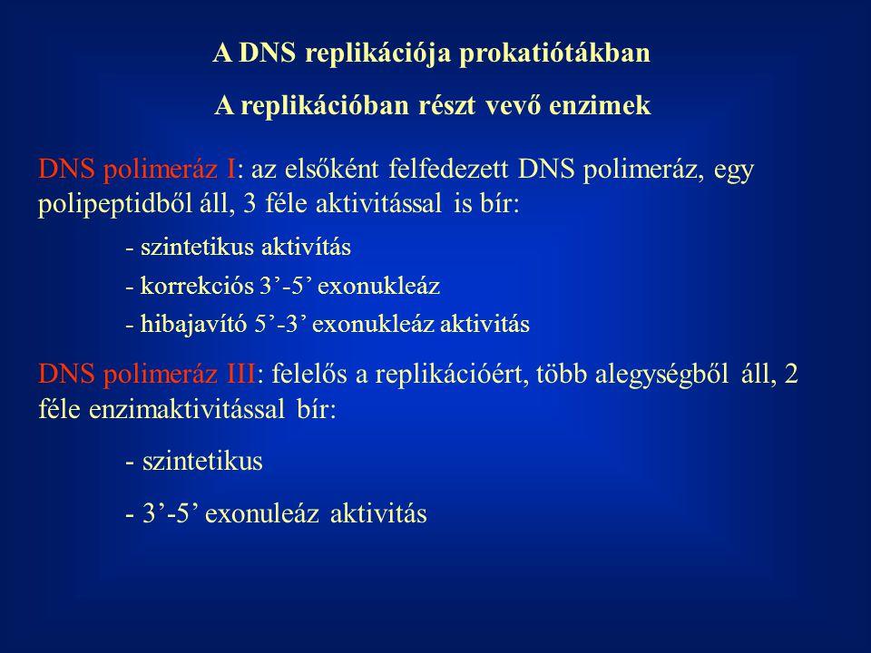 A DNS replikációja prokatiótákban A replikációban részt vevő enzimek