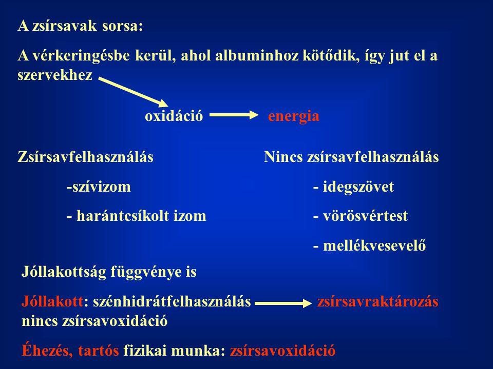 A zsírsavak sorsa: A vérkeringésbe kerül, ahol albuminhoz kötődik, így jut el a szervekhez. oxidáció.