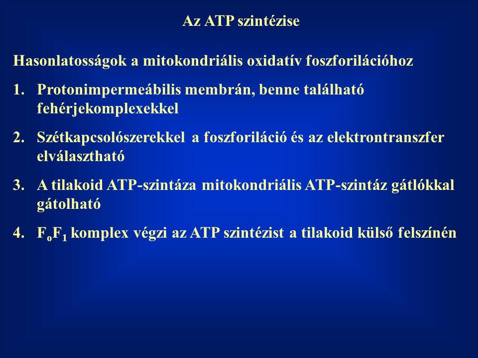 Az ATP szintézise Hasonlatosságok a mitokondriális oxidatív foszforilációhoz. Protonimpermeábilis membrán, benne található fehérjekomplexekkel.