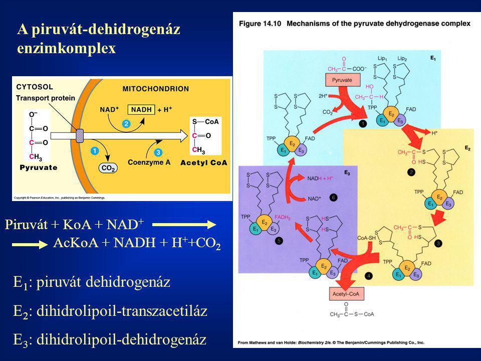 A piruvát-dehidrogenáz enzimkomplex