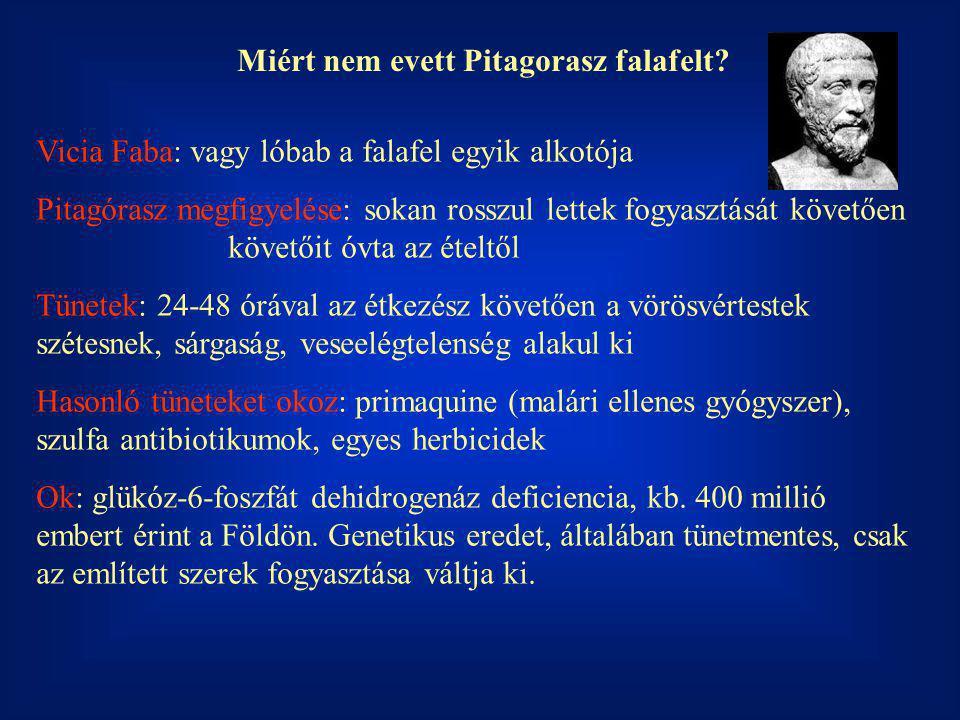 Miért nem evett Pitagorasz falafelt