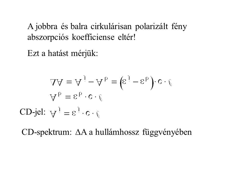 A jobbra és balra cirkulárisan polarizált fény abszorpciós koefficiense eltér!