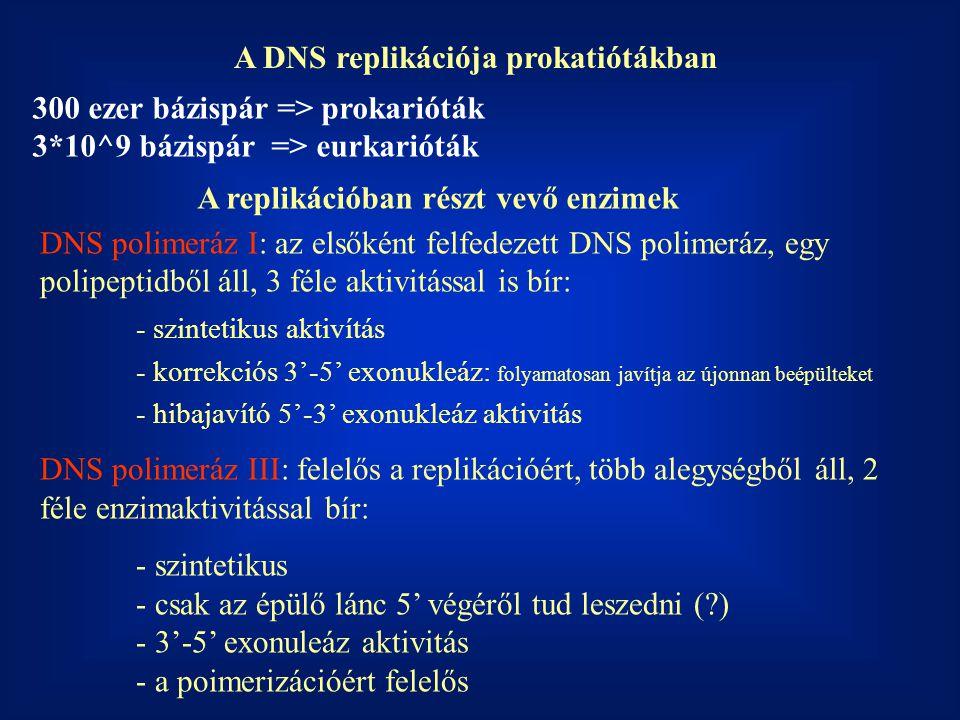 A DNS replikációja prokatiótákban
