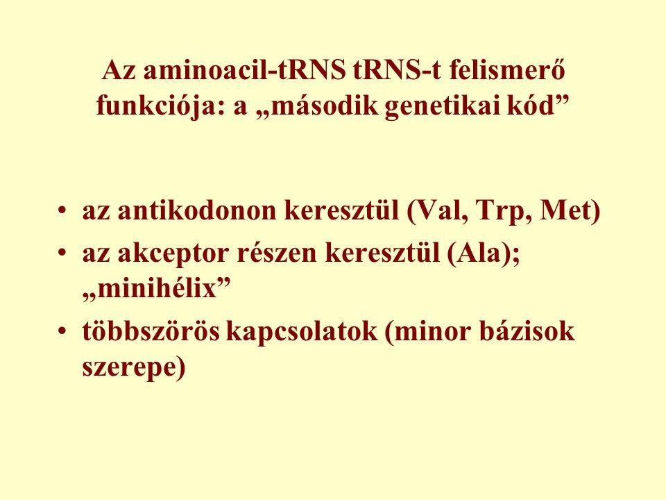 """Az aminoacil-tRNS tRNS-t felismerő funkciója: a """"második genetikai kód"""