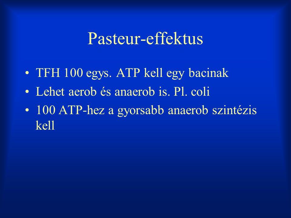 Pasteur-effektus TFH 100 egys. ATP kell egy bacinak