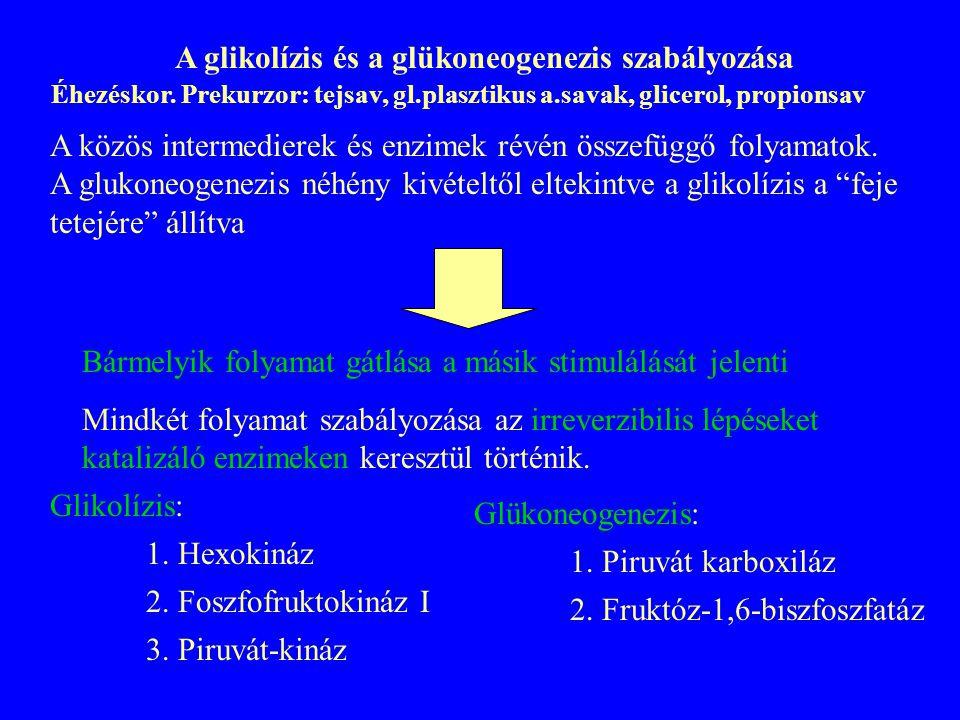 A glikolízis és a glükoneogenezis szabályozása