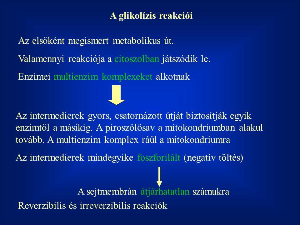 A glikolízis reakciói Az elsőként megismert metabolikus út. Valamennyi reakciója a citoszolban játszódik le.