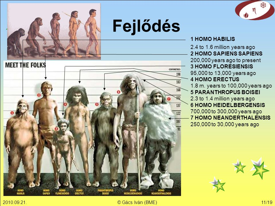 Fejlődés 1 HOMO HABILIS 2.4 to 1.6 million years ago