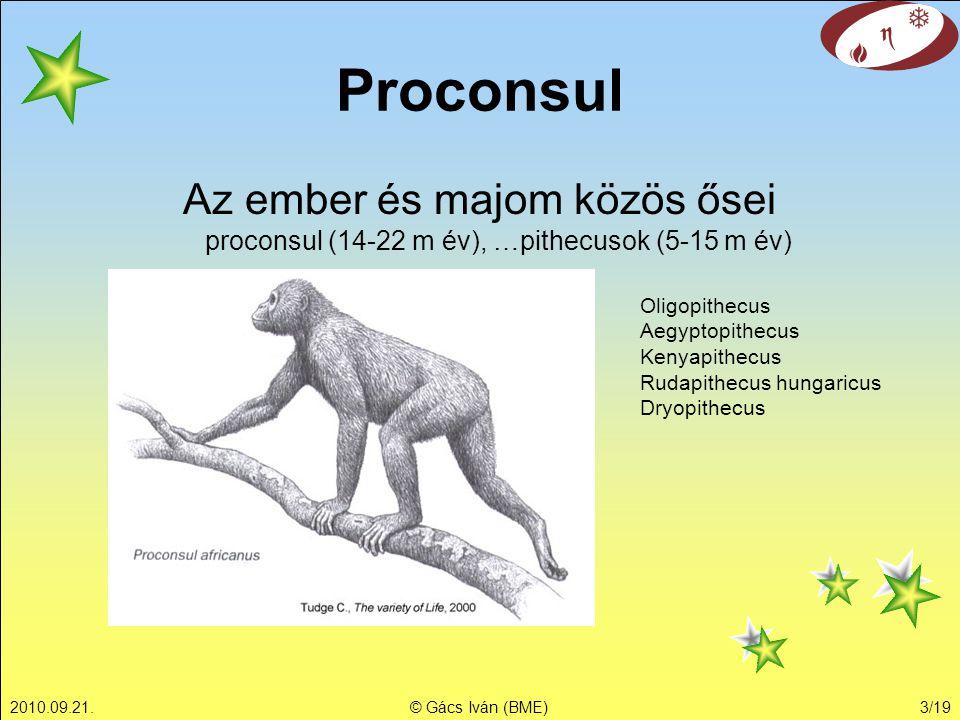 Proconsul Az ember és majom közös ősei proconsul (14-22 m év), …pithecusok (5-15 m év) Oligopithecus.