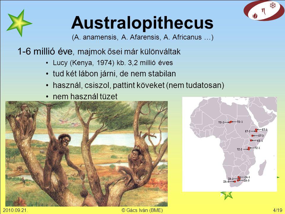Australopithecus (A. anamensis, A. Afarensis, A. Africanus …)