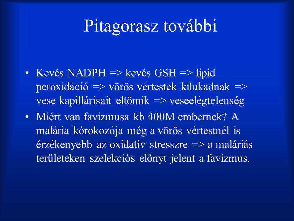 Pitagorasz további Kevés NADPH => kevés GSH => lipid peroxidáció => vörös vértestek kilukadnak => vese kapillárisait eltömik => veseelégtelenség.