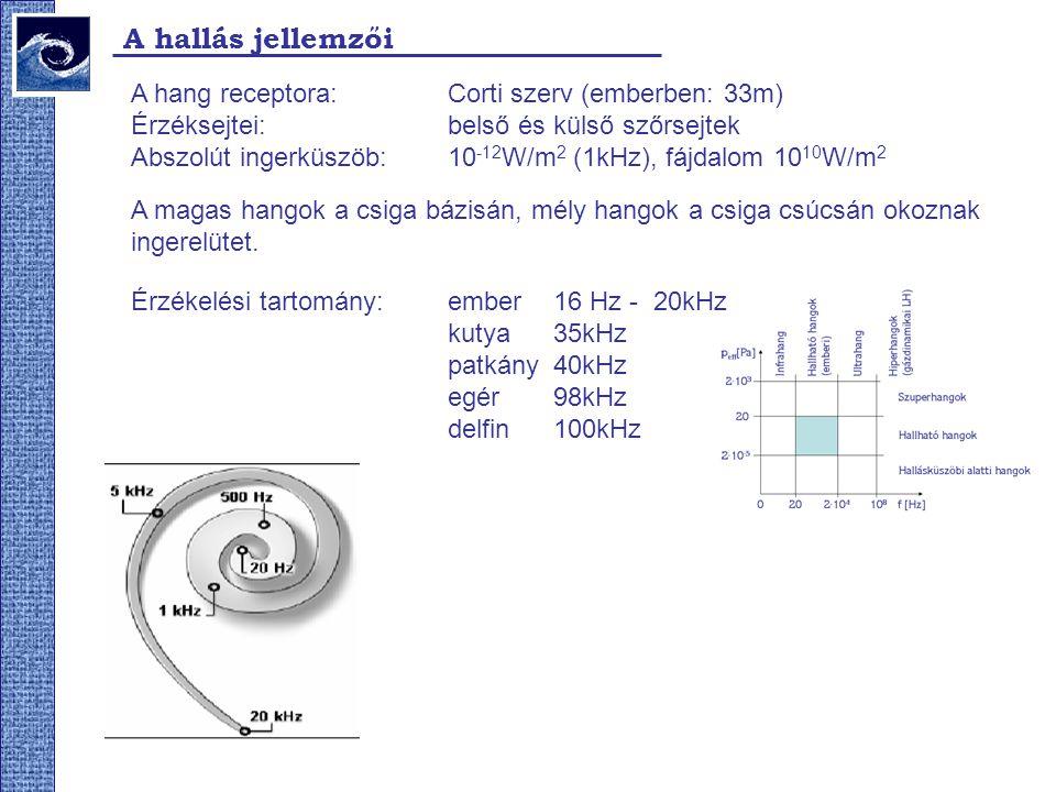 A hallás jellemzői A hang receptora: Corti szerv (emberben: 33m)