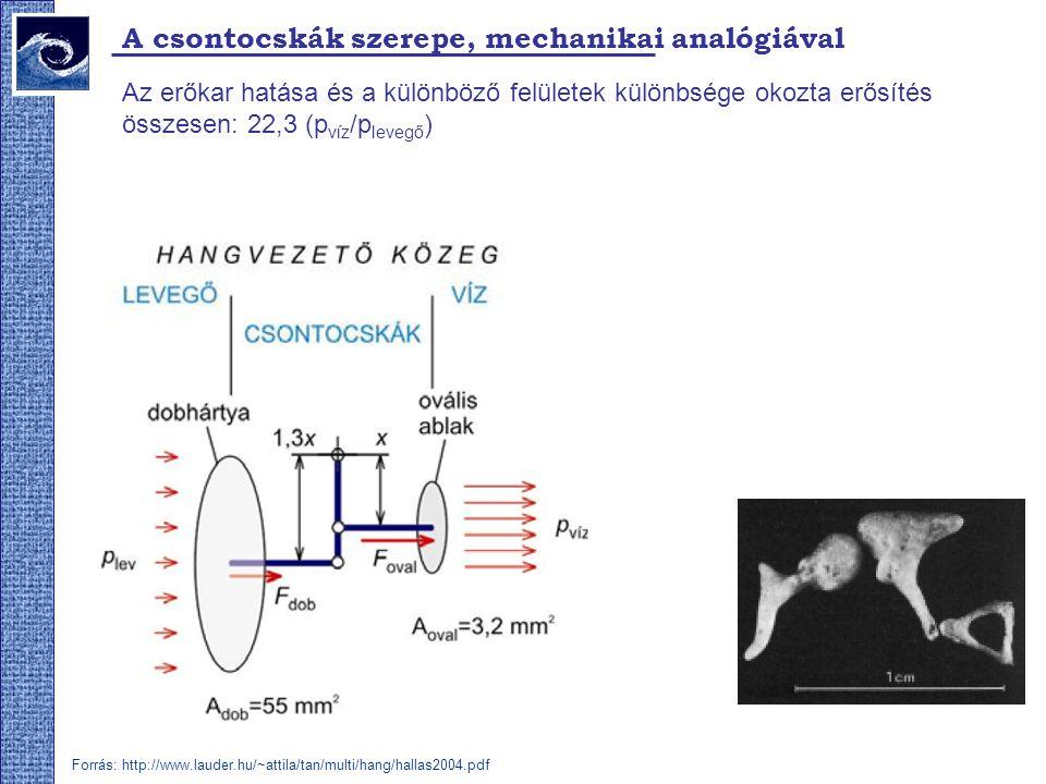 A csontocskák szerepe, mechanikai analógiával