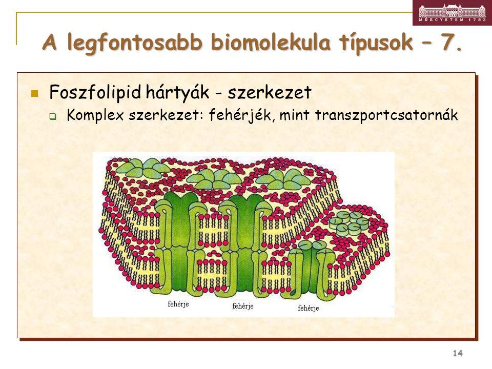 A legfontosabb biomolekula típusok – 7.