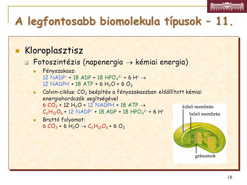 A legfontosabb biomolekula típusok – 11.