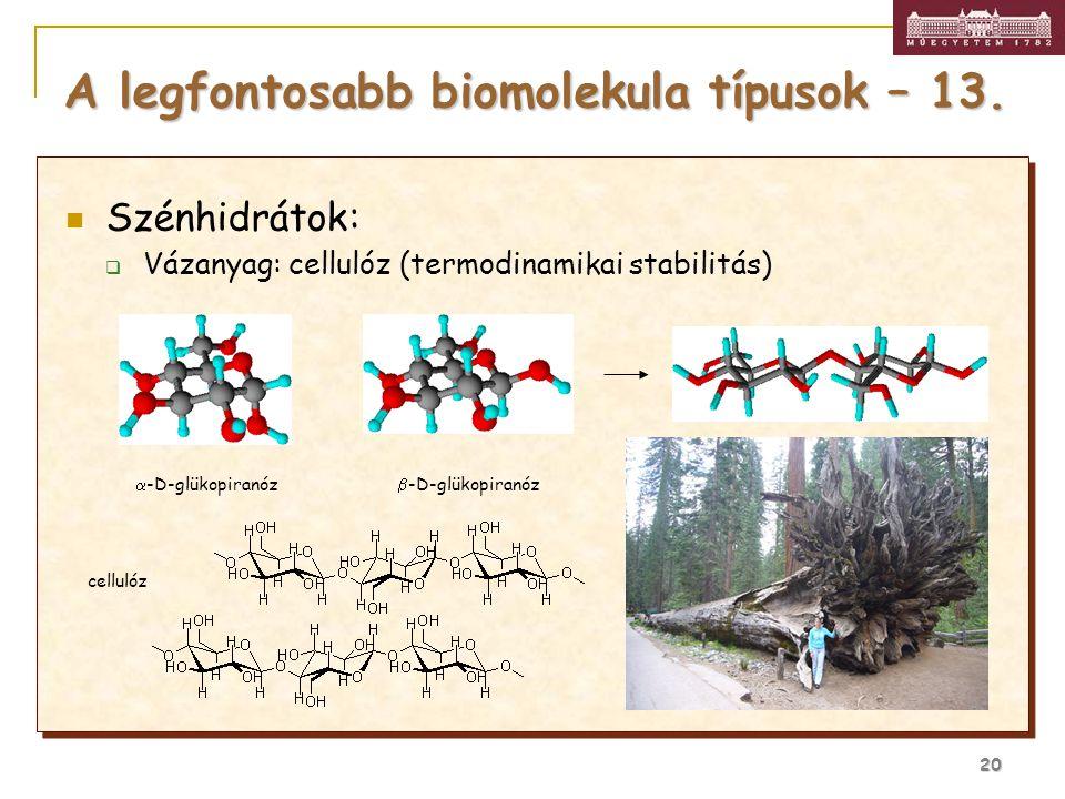 A legfontosabb biomolekula típusok – 13.