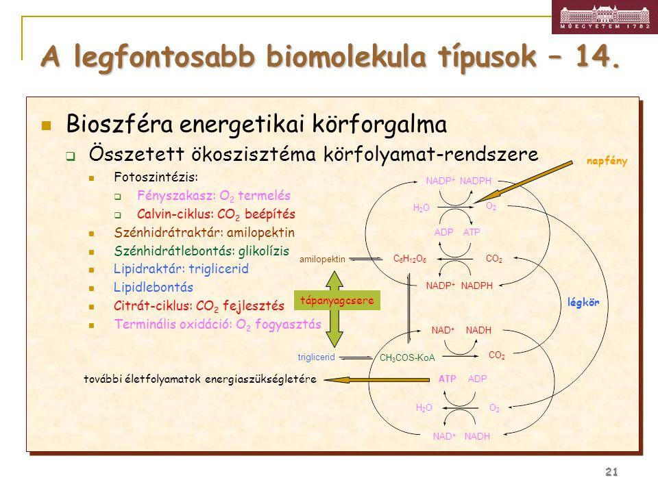 A legfontosabb biomolekula típusok – 14.