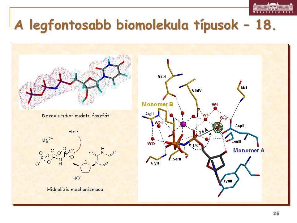A legfontosabb biomolekula típusok – 18.