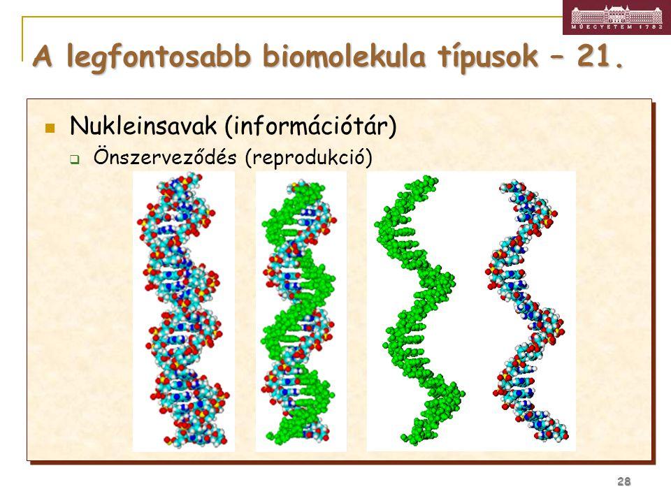 A legfontosabb biomolekula típusok – 21.