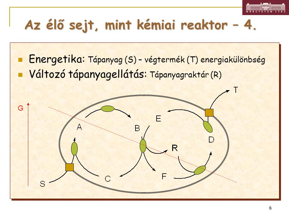 Az élő sejt, mint kémiai reaktor – 4.
