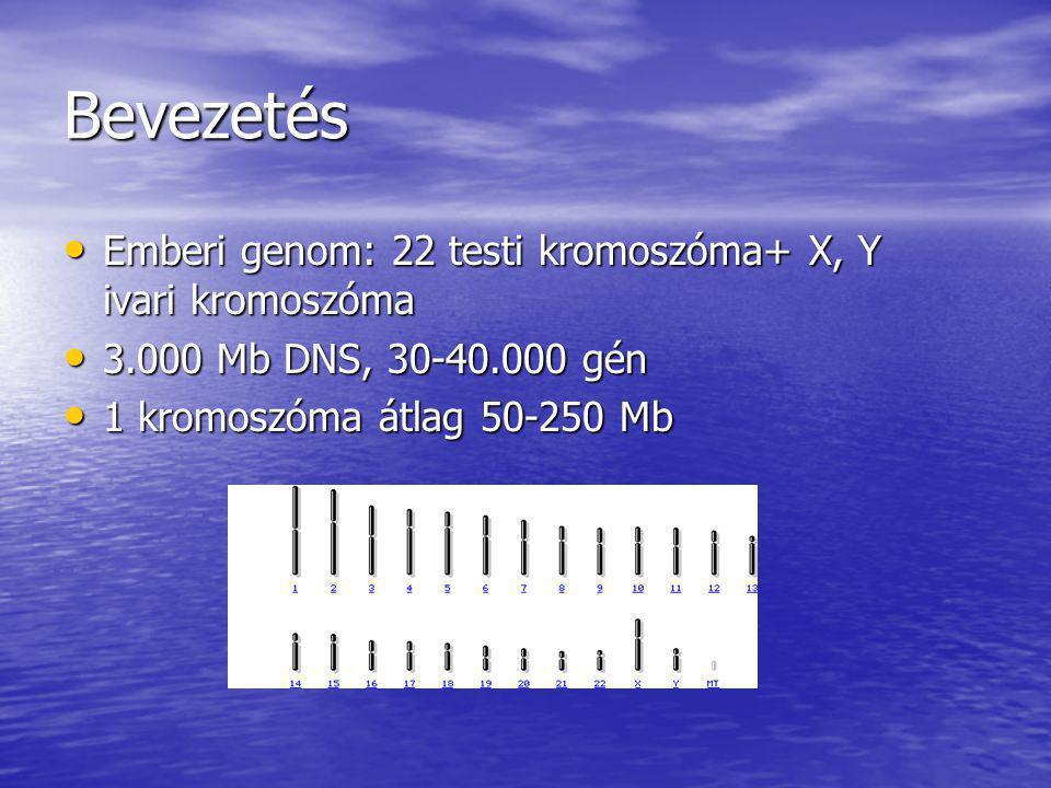 Bevezetés Emberi genom: 22 testi kromoszóma+ X, Y ivari kromoszóma