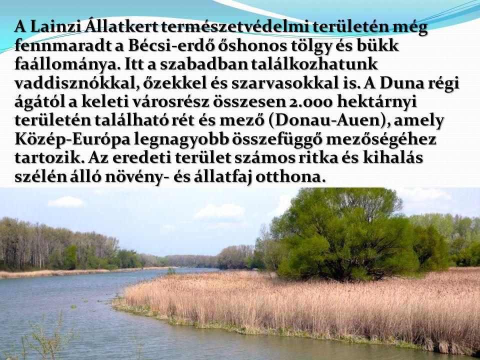A Lainzi Állatkert természetvédelmi területén még fennmaradt a Bécsi-erdő őshonos tölgy és bükk faállománya.