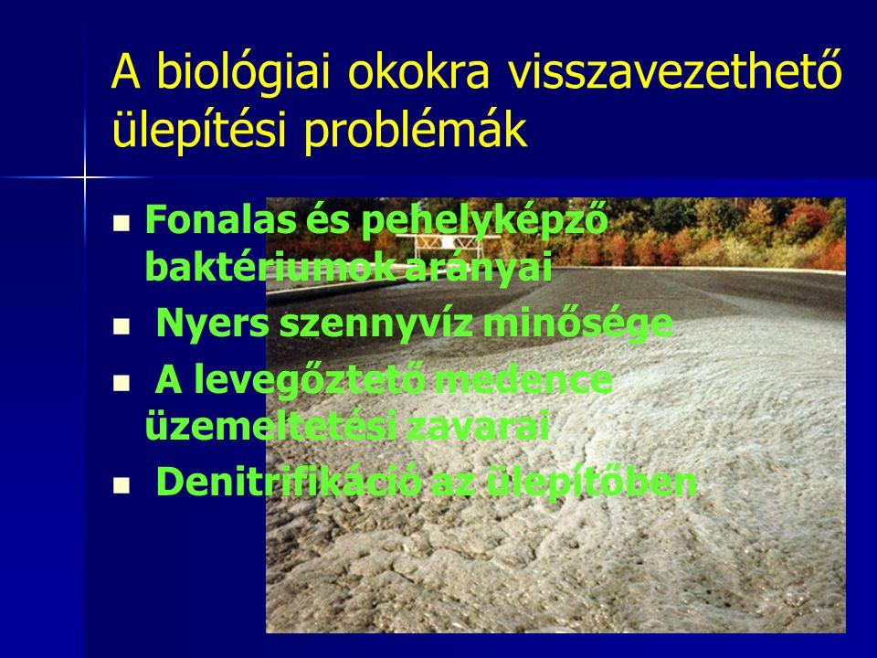 A biológiai okokra visszavezethető ülepítési problémák