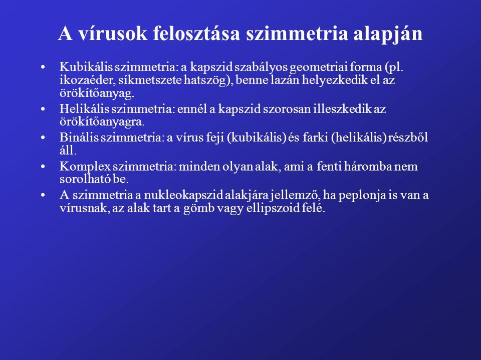 A vírusok felosztása szimmetria alapján