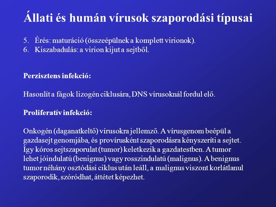 Állati és humán vírusok szaporodási típusai