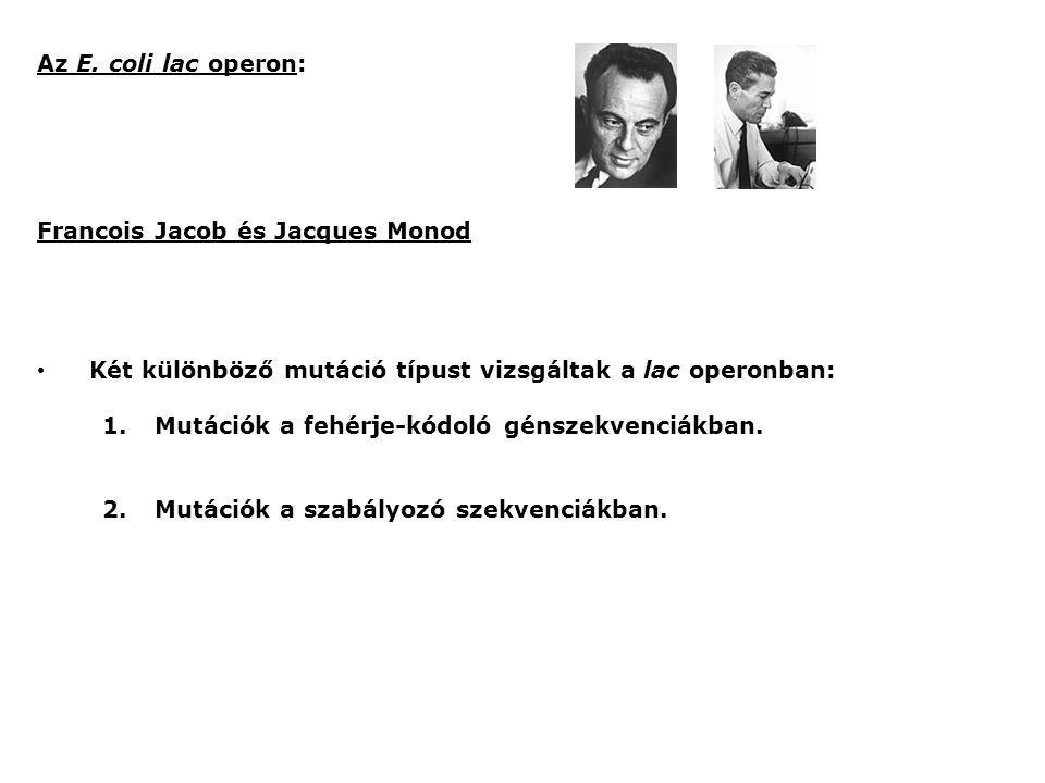 Az E. coli lac operon: Francois Jacob és Jacques Monod. Két különböző mutáció típust vizsgáltak a lac operonban:
