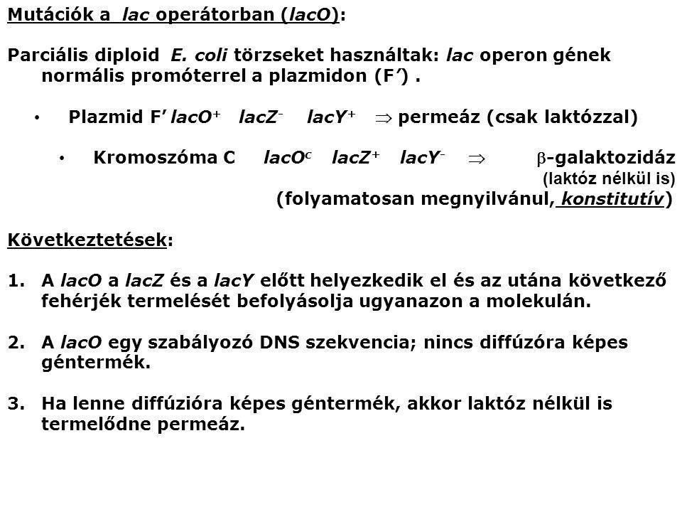 Plazmid F' lacO+ lacZ- lacY+  permeáz (csak laktózzal)