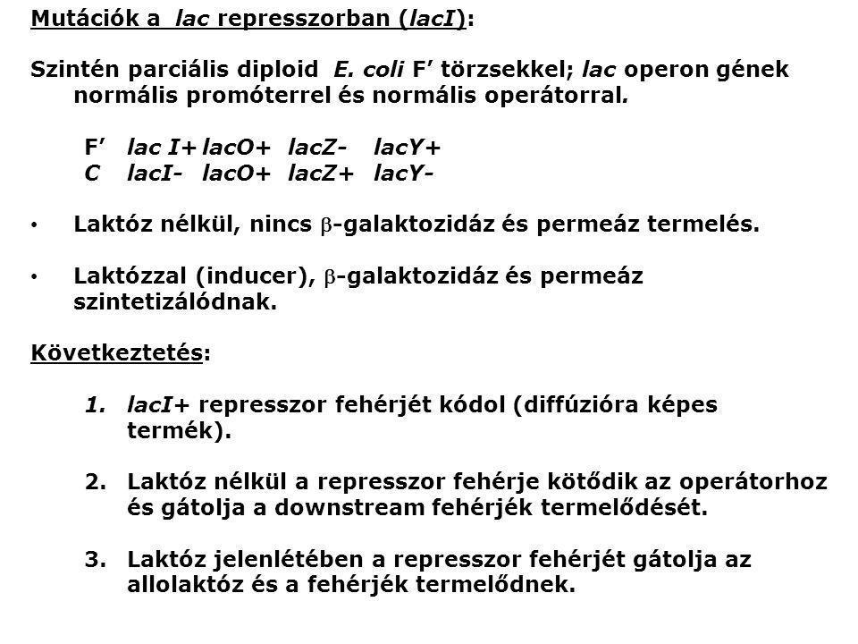 Mutációk a lac represszorban (lacI):