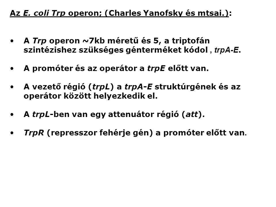 Az E. coli Trp operon; (Charles Yanofsky és mtsai.):
