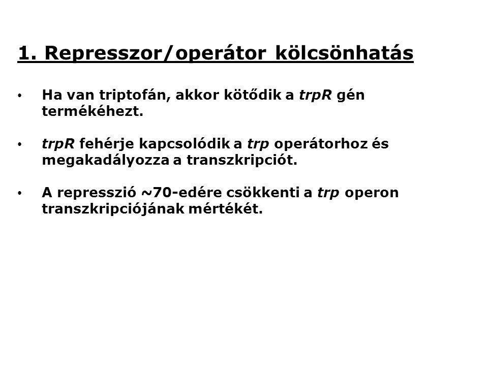 1. Represszor/operátor kölcsönhatás