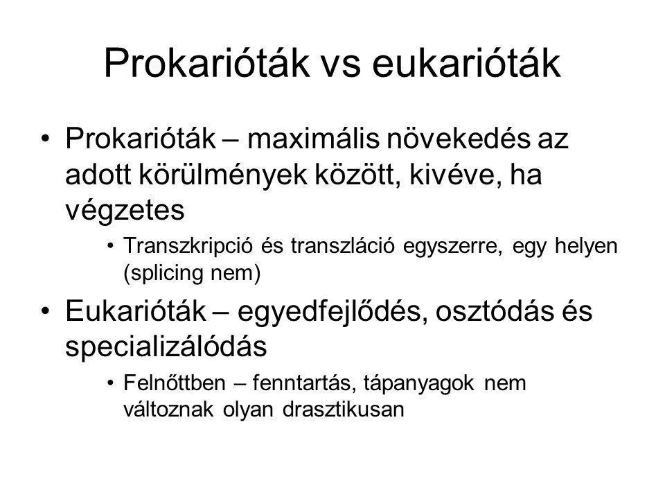 Prokarióták vs eukarióták