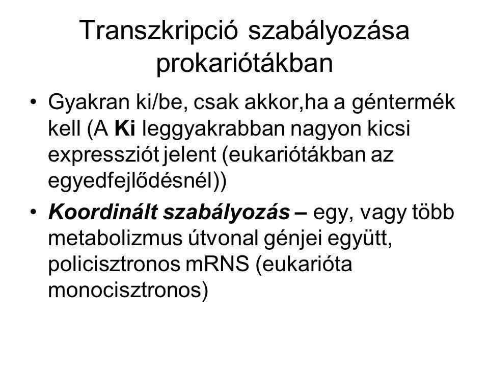 Transzkripció szabályozása prokariótákban