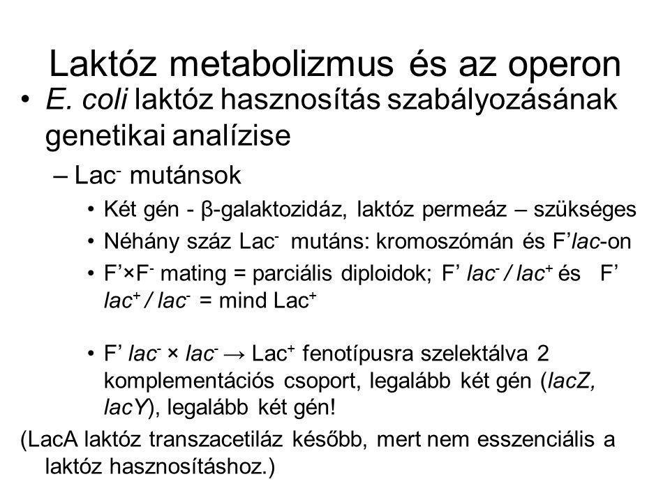 Laktóz metabolizmus és az operon
