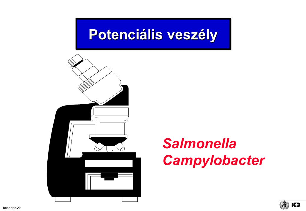Potenciális veszély Salmonella Campylobacter