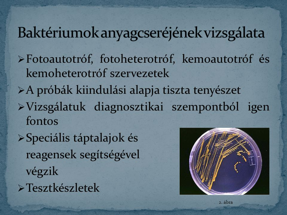 Baktériumok anyagcseréjének vizsgálata