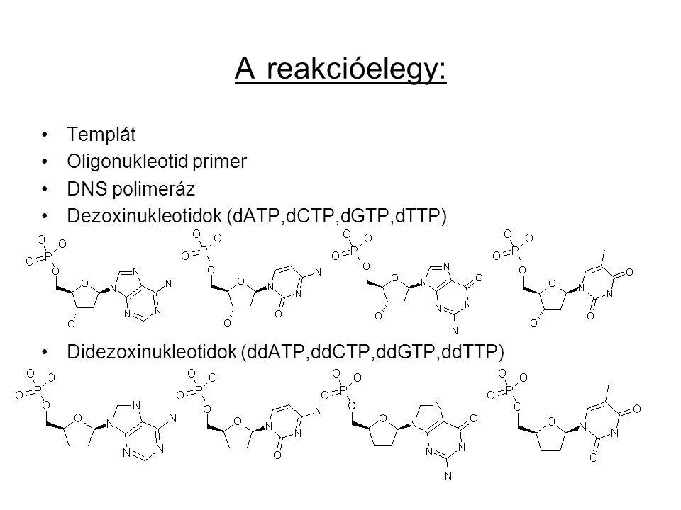 A reakcióelegy: Templát Oligonukleotid primer DNS polimeráz