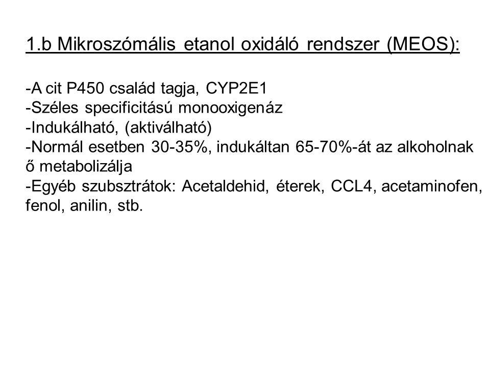 1.b Mikroszómális etanol oxidáló rendszer (MEOS):