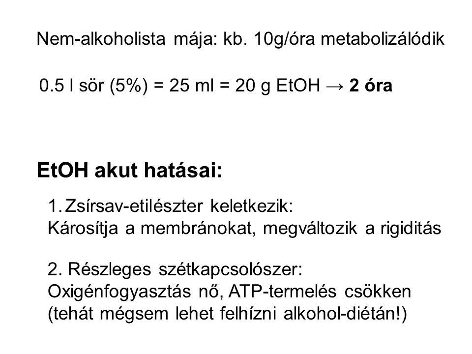 EtOH akut hatásai: Nem-alkoholista mája: kb. 10g/óra metabolizálódik