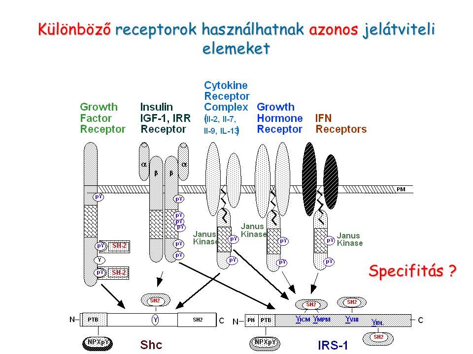 Különböző receptorok használhatnak azonos jelátviteli elemeket