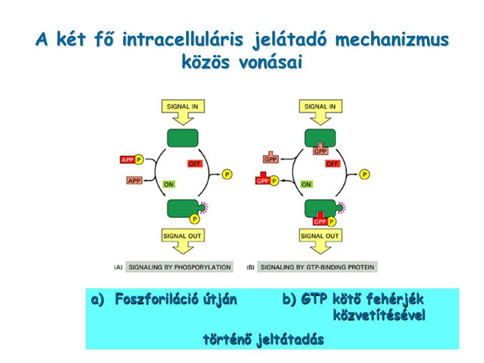 A két fő intracelluláris jelátadó mechanizmus közös vonásai