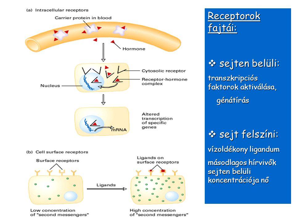 Receptorok fajtái: sejten belüli: sejt felszíni: