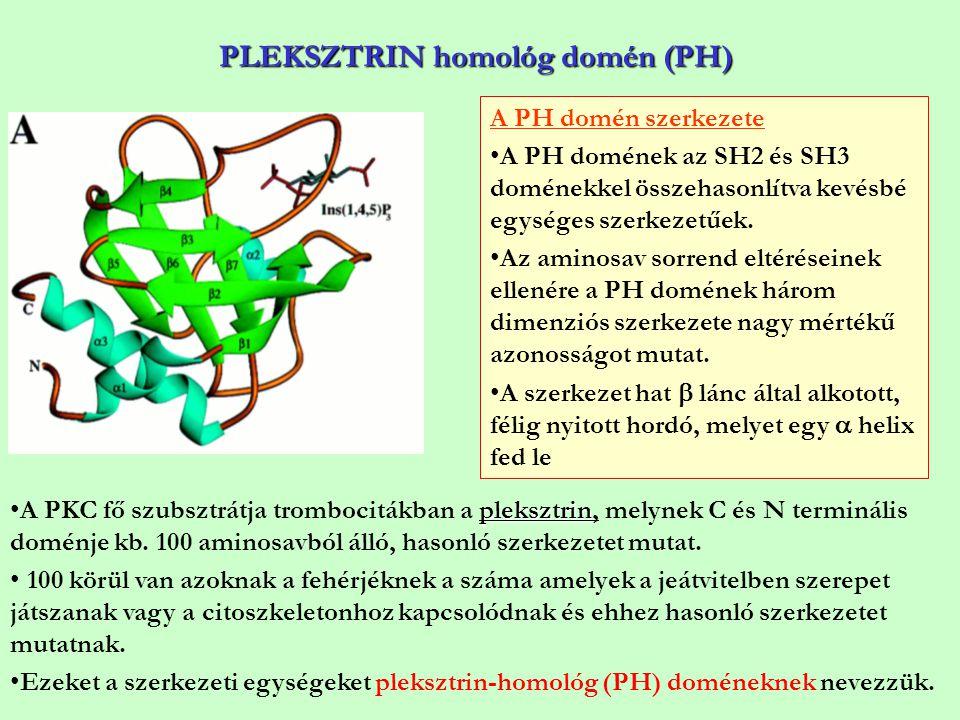 PLEKSZTRIN homológ domén (PH)