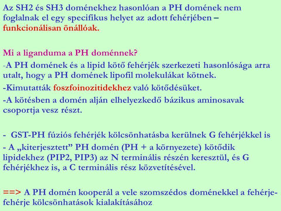 Az SH2 és SH3 doménekhez hasonlóan a PH domének nem foglalnak el egy specifikus helyet az adott fehérjében – funkcionálisan önállóak.